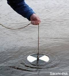 Secchi Disk Measuring Water Clarity in Severn Sound